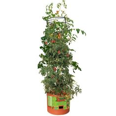 Say hello to summer with the Hydrofarm Tomato Barrel with 4 ft. Designed to encourage vibrant growth of climbing plants and flowers,. Hydroponics Setup, Hydroponic Supplies, Hydroponic Gardening, Container Gardening, Tomato Trellis, Tomato Garden, Starting Plants From Seeds, Growing Tomatoes In Containers, Grow Tomatoes