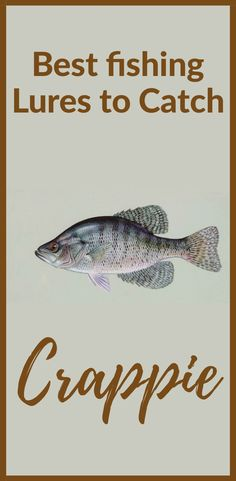 Best Fishing Lures to Catch Crappie, Crappies are some of the most addicting and. - Best Fishing Lures to Catch Crappie, Crappies are some of the most addicting and enjoyable fish to - Crappie Lures, Crappie Fishing Tips, Trout Fishing, Fishing Tricks, Crappie Jigs, Best Fishing Lures, Kayak Fishing, Fishing Tackle, Fishing Rods