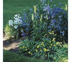 Simple Border for Sun or Shade 3 plants