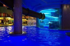 Slide through the 200,000 gallon shark tank aquarium at the Golden Nugget Las Vegas!