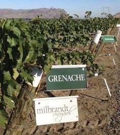 Going to the Rhône. Milbrandt Vineyards