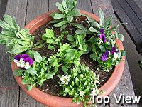 How To Plant A Color Bowl | Fall Container Garden