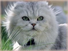 """""""A cat in grass is a lion in the jungle."""" --English Proverb"""