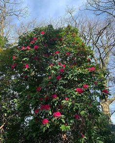 #dogwslk #sun #bluesky #rhododendron Follow Me On Instagram, Sun, Photos, Pictures, Cake Smash Pictures, Solar