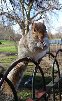 The happiest squirrel in the world!