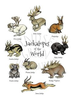 This is an x 21 cm) inkjet print of my original Jackalopes of the World illustration, from my Jackalopia zine. The Jackalopia zine explores the many different species of jackalope that have adapted to live in different climates all around the wor Mythical Creatures Art, Mythological Creatures, Cute Fantasy Creatures, Mystical Creatures Drawings, List Of Magical Creatures, Magical Creatures Harry Potter, Lovely Creatures, Creature Drawings, Animal Drawings