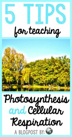 5 ideas for secondary biology teachers to use when teaching photosynthesis and cellular respiration (energy flow as I like to call it!) in their classrooms.