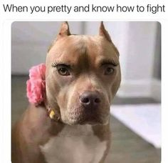 Rapid Tail-Wagging Doggo Memes Dog Memes) - World's largest collection of cat memes and other animals Animal Memes, Funny Animals, Cute Animals, Animal Humor, Dog Memes, Funny Memes, Hilarious, Funny Tweets, Funny Quotes