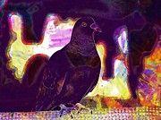 "New artwork for sale! - "" Domestic Pigeon Bird Gray Feathers  by PixBreak Art "" - http://ift.tt/2h7RYak"