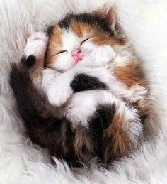 See more 5 Cutest Kittens You will Ever See ___ Click the Link in my Bio and what you will find there use it as a Gift. by dorthy Cute Cats And Kittens, I Love Cats, Crazy Cats, Kittens Cutest, Kittens Playing, Pretty Cats, Beautiful Cats, Animals Beautiful, Cute Funny Animals