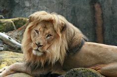 big cats pics   Big Cat by Sean G***** in Big five game, San Francisco Zoo on ...