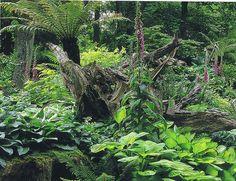 stumpery garden pictures | ... Collection Galleries World Map App Garden Camera Finder Flickr Blog Garden Nook, Bog Garden, Ferns Garden, Garden Trees, Garden Spaces, Shade Garden, Walled Garden, Landscape Design, Garden Design