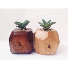 Wood & Succulent. Goosucc.  crassula perfoliata var. falcata #goosucc #goosucculents #wood #oak #couple #succulents #plants #gifts #madeinukraine #kyiv #homedecor #dscollections #crassula https://www.facebook.com/goosucc