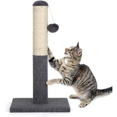 This domestic cat scratch post is very easy to install and can be completed in three steps. Made of high quality sisal, corduroy and natural wood, which is very sturdy, durable and safe for kitten and large cats. Plush sisal scratch pole will keep your cat entertained all day long and without worrying about other furniture getting scratched, which is a ideal choice that could make your cat's life better and more fun. Specification: Material: Sisal, wood, corduroy Color: Gray, white Dimensions: 1 Cat Activity, Cat Scratching Post, Cat Climbing, Kittens Playing, Domestic Cat, Buy A Cat, Happy Animals, Cat Life, Pet Toys