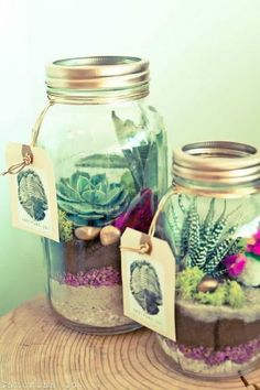 Organic Mason Jar Terrarium: Love the pop of colors in these mason jars.