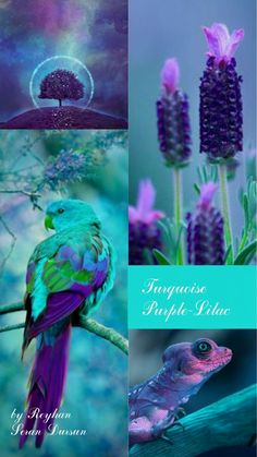 S colours- Turquoise-Purple- Lilac '' by Reyhan Seran Dursun Blue Colour Palette, Teal Colors, Colour Schemes, Color Patterns, Color Combinations, Colours, Peacock Colors, Turquoise And Purple, Purple Lilac