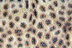 texture corai 10 La texture des coraux