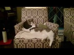 Gilbert and Rosie love each other https://www.youtube.com/watch?v=_fFJqVHwaF8&feature=share