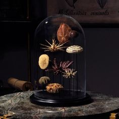 Nature items display in protective glass cloche.