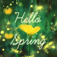 "Hello Spring!  Remember James 1:17, ""Every good and perfect gift is from above"".  Happy Spring!"