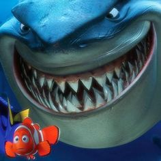 Hot: Photographer snaps shark that looks like Bruce from Finding Nemo