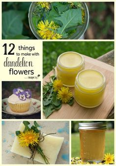 12 Things to Make With Dandelion Flowers - In this article, you'll learn 12 practical ways that you can use dandelion flowers to make things that are good and useful for you and your family. (1) Dandelion Oil (2) Dandelion Salve (3) Dandelion Vinegar (4) Traditional Dandelion Syrup (5) Dandelion Soaps (6) Dandelion Lotion Bars (7) Dandelion Tea (8) Dandelion Magnesium Lotion (9) Dandelion Tincture (10) Dandelion Infused Honey (11) Dandelion Cupcakes (12) Dandelion Bath Bombs