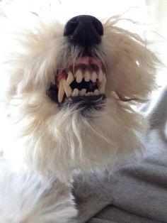 WFT Clean teeth! :->