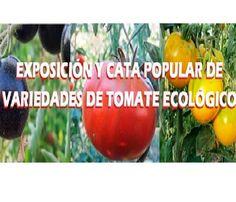 EXPOSICIÓN Y CATA POPULAR DE TOMATE ECOLÓGICO 2014 ecoagricultor.com