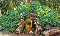 Der Keyhole Garden oder Selbstversorger-Garten ist ein Beet mit integriertem Kompostbehälter. Ein einfaches DIY-Projekt - günstig und ressourcenschonend. Garden Projects, Diy Projects, Garden Structures, Cactus Plants, Gardening Tips, Life Hacks, About Me Blog, Deadpool, Diy Ideas