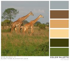 Color Palette: La mia Africa