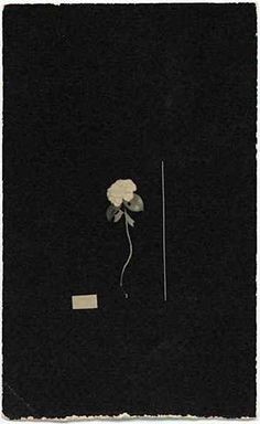 By photographer Masao Yamamoto Yamamoto, Motif Floral, Art Plastique, Photographic Prints, Japanese Art, Bunt, Art Photography, Artistic Photography, Illustration Art