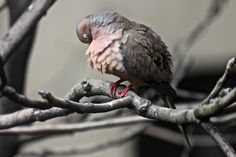 This image (View Eleven) was featured in one of my posts on blogger re questions about young mourning doves AND informative answers are appreciated @ http://www.thelastleafgardener.com/2013/06/an-open-letter-re-young-mourning-doves.html!
