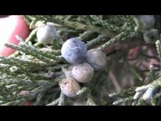 Wild Edible Plants Winter