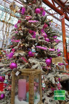 Kerst inspiratie doe je op in de kerstshow van tuincentrum Osdorp. Dit kerstthema heet Vrolijke kerst, de kleuren springen uit je boom en de versiering is allemaal met een knipoog, het is gewoon het vrolijkste kerstthema dat wij hebben! Christmas Wreaths, Christmas Decorations, Christmas Tree, Holiday Decor, Purple, Home Decor, Xmas, Teal Christmas Tree, Decoration Home