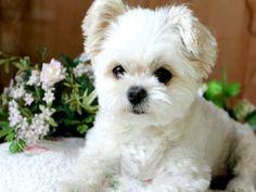 Un lindo perro de color blanco