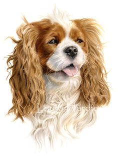 Coloured pencil portrait of a Cavalier King Charles Spaniel - Laura Hardie