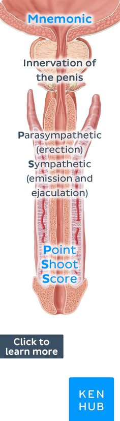 Point, Shoot, Score! #anatomy #mnemonic