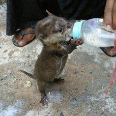 Baby otter...unbelievably cute