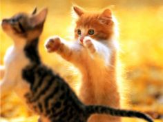 cat and kittens l Love #Cats? Click here http://amazingcatvideos.com to Watch the world's amazing cat videos