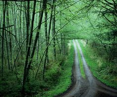 Green forest paths