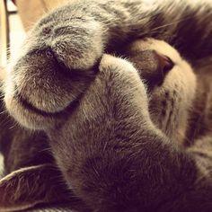 feet AND nose..:-)                                                                                                                                                                                 Mais