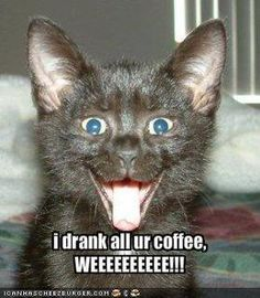 Funny Cat Photo: I drank all your coffee. Next time give me catnip. weeee. lol!
