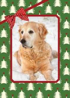 Make a holiday flag featuring your pet's photo! Choose from lots of artist designs. Easy to customize online in minutes. Double sided flags printed on high quality fabric in North Carolina.
