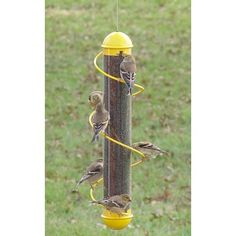 Green 4 Port Ambitious Ring-pull™ Niger Feeder 2 Year Warranty