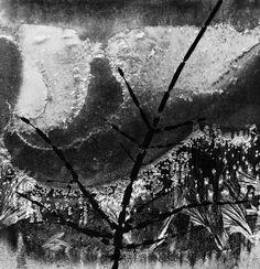 Minor White, Ritual Branch, Frost Window, December 8, 1958