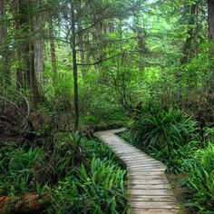 Rainforest Trail near Tofino is a beautiful spot for a short hike. The old growth forest is amazing #Tofino #rainforest Mountain Photography, South America, Trail, Old Things, Hiking, Country Roads, World, Amazing, Instagram Posts