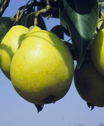 1000 images about plants fruit edible on pinterest fruit trees high maintenance and sunlight - Planting fruit trees in the fall a garden full of vigor ...