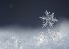 thinking of my cousin Cathy who loves snowflakes.