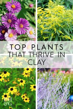 Clay soil makes gardening tough. It's slippery when wet, and it bakes solid when dry. But, that doesn't mean you can't grow gorgeous garden plants in clay soil. Here are 25 beautiful plants that grow well in clay. Clay Soil Plants, Planting In Clay, Planting Flowers, Flower Gardening, Vegetable Gardening, Gardening Tips, Outdoor Landscaping, Landscaping Plants, Outdoor Plants