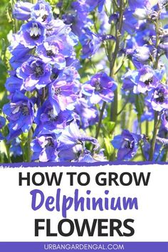 Delphiniums are stunning perennials with beautiful spikes of colorful flowers. Here's how to grow Delphiniums in your flower garden. #flowers #perennials #flowergarden Hardy Perennials, Flowers Perennials, Planting Flowers, Flower Gardening, Delphinium Flowers, Delphiniums, Gardening For Beginners, Gardening Tips, Easy Vegetables To Grow